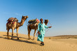 Cameleer (camel driver) with camels in dunes of Thar desert. Raj