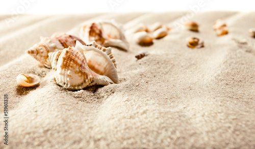 Cockleshells on sea sand