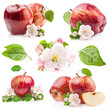 Collection of  Red Apples with flowers isolated on white
