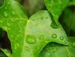 雨の日のアイピー