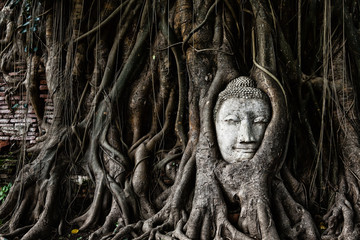Head of Sandstone Buddha in The Tree Roots at Wat Mahathat