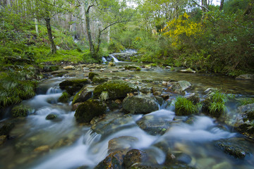 Water flows along a mountain stream in Galicia, Spain