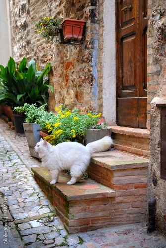 Italian old house and cat