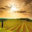 Chianti region, vineyard, trees and farm on sunset. Tuscany, Ita