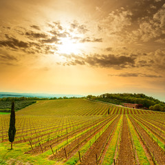 Chianti region, vineyard, trees and farm on sunset. Tuscany, Ita