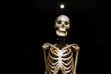 Human Anatomy real skeleton on a black background