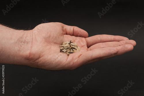 Reiskörner in der Hand