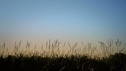 Blowing grass in silhouette.