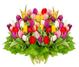 Fototapety fresh colorful tulips over white