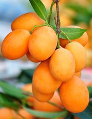 marian plum