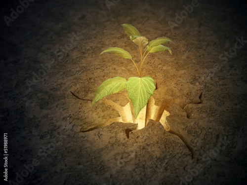 Plant growing from a crack in the ground