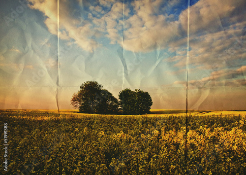 paper oilseed field