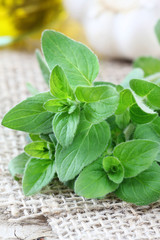 Bundle of fresh marjoram
