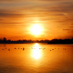 colorful sunset at the river bank with bird silhouetts