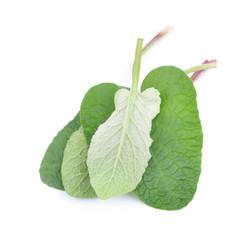Burdock leaves