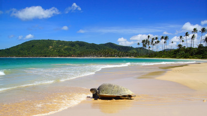 Sea turtle on beach. El Nido, Philippines