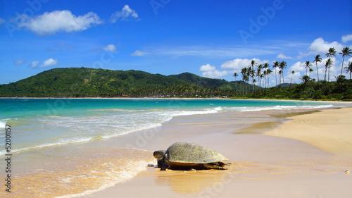 Leinwanddruck Bild Sea turtle on beach. El Nido, Philippines