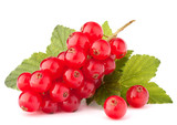 Fototapety Red currants and green leaves still life