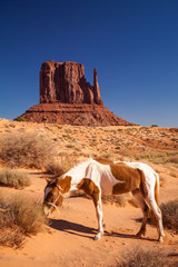 Horse and Monument Valley, USA