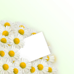 Bouquet of daisies and a letter