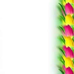 Tulip border