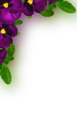 Viola tricolor flowers corner frame