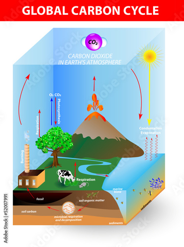 carbon cycle. Vector diagram