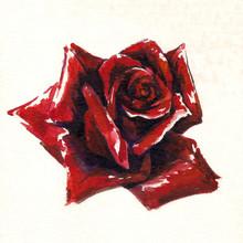 Czerwona róża akwarela malowane