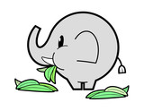 Elephant eating green grass