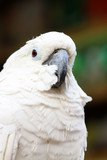 white parrot in a zoo