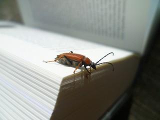 Natur und Literatur