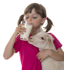 little girl drinking healthy goat milk and holding little goat