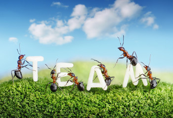 ants constructing word team with letters, teamwork