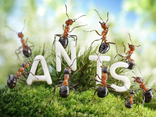We Are The Ants. ant tales