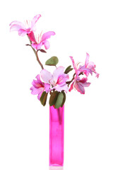 Pink Bauhinia flower  in the vase