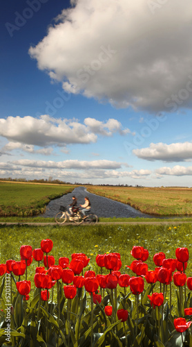Holland landscape with red tulips against bikers