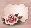 Retro greeting card with pink rose. Vector illustration