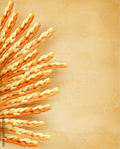 Ears of wheat on old paper background. Vector illustration