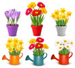 Collection of spring and summer colorful flowers in pots