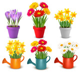 Fototapety Collection of spring and summer colorful flowers in pots