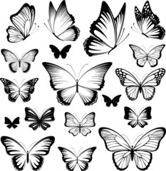 butterfies tattoo silhouettes