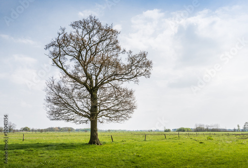 Budding tree in a rural area in the spring season.