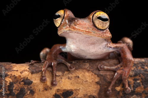 tropical tree frog at night