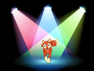A fox at the stage with spotlights