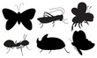 Black colored insects