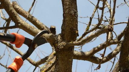 fruit tree cut trim prune two handle clipper spring garden