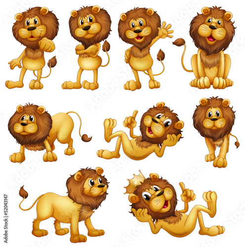 Lions in different positions