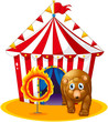 A red tent at the back of a bear and a flaming ring