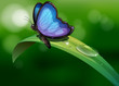 A blue butterfly above a leaf