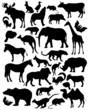 Постер, плакат: silhouette mammals